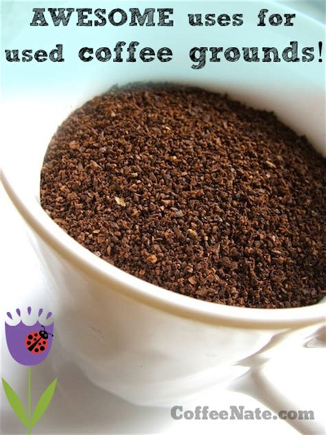 Coffee Grounds For Gardening by Improve Your Garden With Used Coffee Grounds Coffeenate