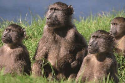 kingdom animalia ciri struktur klasifikasi  contoh
