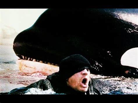 ataques de ataques de orcas a humanos youtube