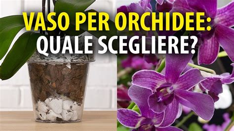 coltivazione orchidee in vaso vasi per orchidee quale scegliere