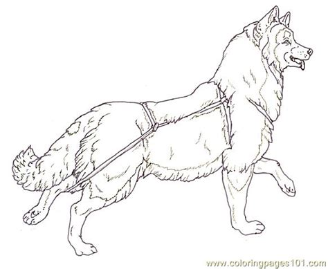 dog sled racing coloring pages coloring pages