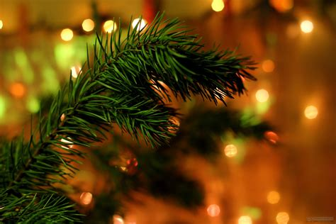 tip on picking right christmas tree for christmas festival