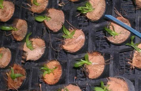 Pot Tanaman Anggrek cara menanam bunga anggrek pada media tanam yang benar