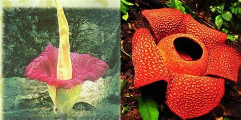 perbedaan  diketahui antara bunga bangkai