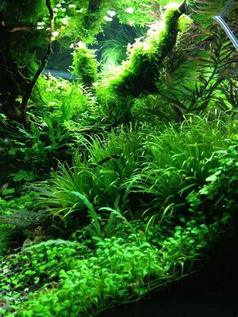 How To Aquascape A Freshwater Aquarium by Best 25 Aquarium Aquascape Ideas On