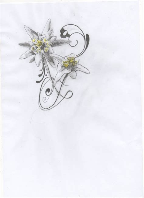 edelweiss tattoo design 25 best ideas about edelweiss on lotus