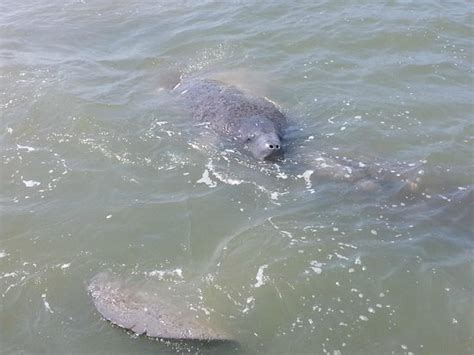 turtle mound boat tours new smyrna beach turtle mound tours dolphin siting picture of turtle