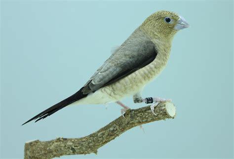 len vogel lüneburg fotokooi arjan boelen vogelfotografie