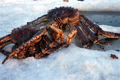 alaskan king crab reddelibox hong kong seafood delivery order