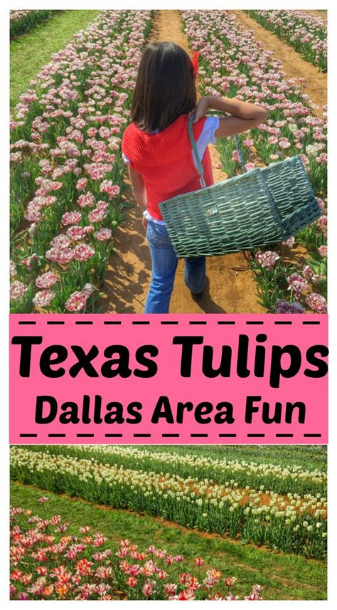 pininterest frugal friendship visit tulips a destination for dallas area finding debra