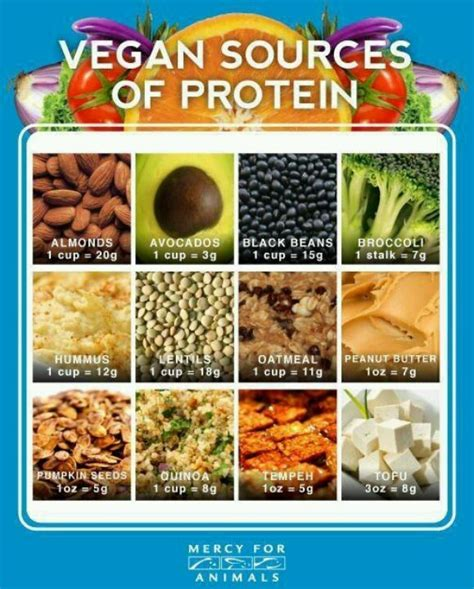 Sources Of Protein by Vegan Protein Sources Vegetarian