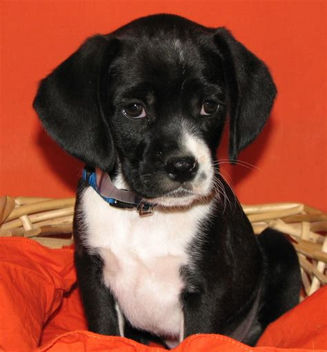 brighton puppy rescue lifeline puppy rescue adopt a new best friend this week photos huffpost