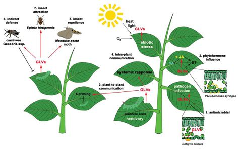 ijms free full text green leaf volatiles a plant s