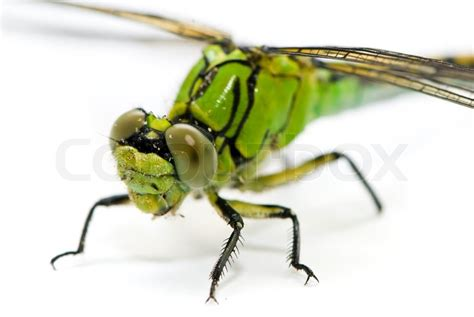 green dragonfly l pics for gt green dragonfly pictures