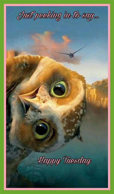 happy tuesday animals owl pictures funny owls