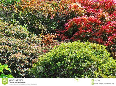 colourful shrubs royalty free stock image image 31413656