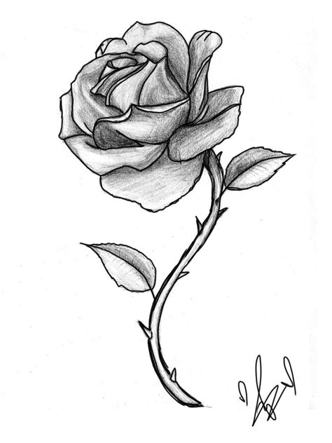 rose sketch by jesseluvviolet on deviantart