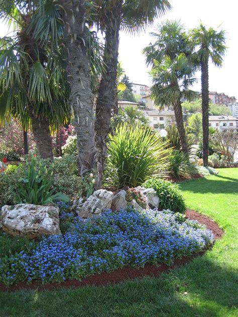 palme da giardino palme da giardino homeimg it