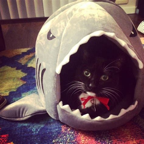 shark bed for cats grey shark bed for small cat dog cave bed removable cushion felinefurni com