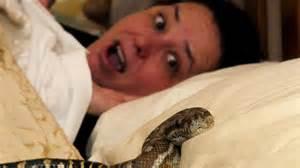 Python Bathroom News Snake Found In Bedroom Of Springs Nt News