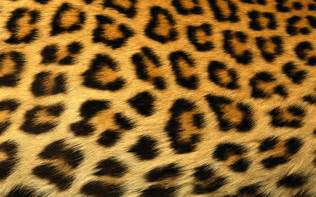 Jaguar Print Erica Bunker Diy Style The Of Cultivating A Stylish