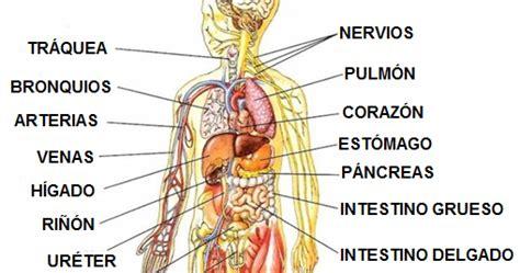 fotos del interior del cuerpo humano el cuerpo humano partes del cuerpo humano