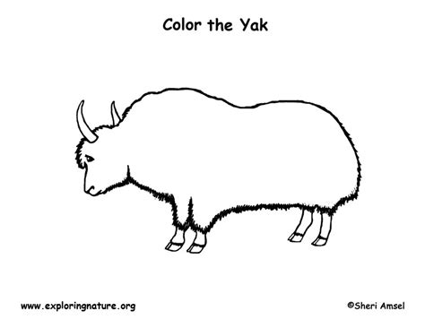 free coloring pages yak yak coloring nature