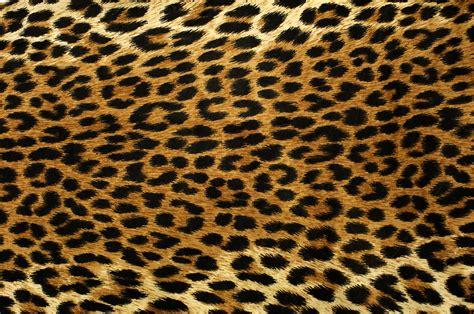pattern photoshop leopard hybrids in photoshop sja media arts