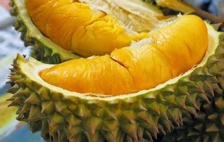 Boleh Ga Hamil Muda Makan Jengkol Bolehkah Makan Durian Saat Hamil Muda Walaupun Sedikit