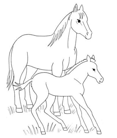 coloring pages of horse and foal horse and foal coloring page free printable coloring pages