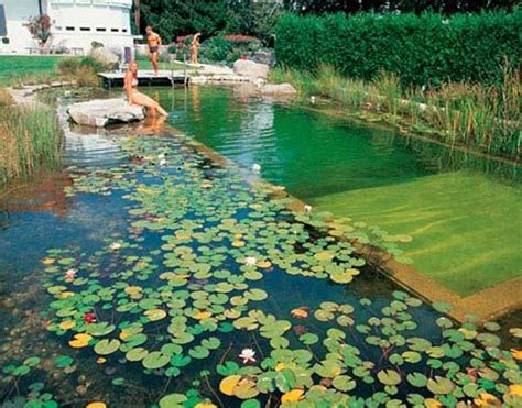 backyard natural pools      immediately