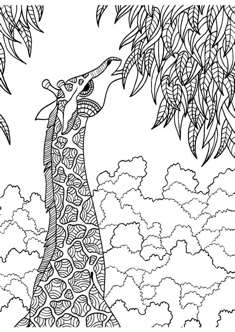 Giraffe adult colouring page : Colouring In Sheets - Art
