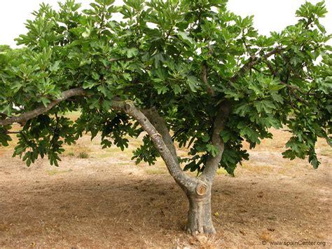 jes 250 s se levant 243 y dijo a sus disc 237 pulos imagenes parabola de la higuera sin fruto wikipedia la grcom info