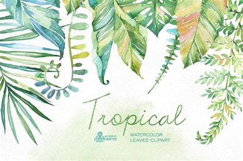 tropical watercolor leaves objects creative market