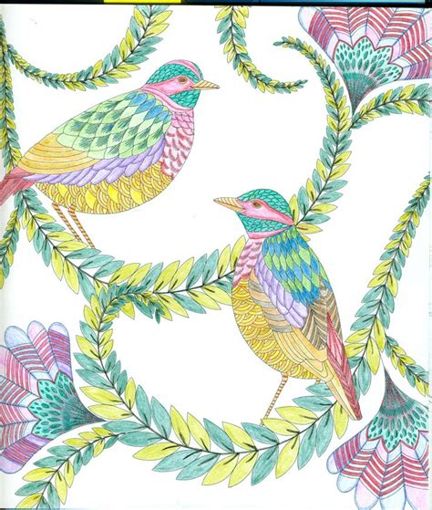 millie marottas beautiful birds 11 best images about millie marotta animal kingdom on herons coloring and gel pens