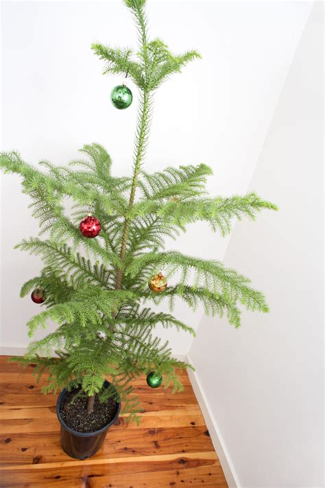 photo of simple christmas tree free christmas images