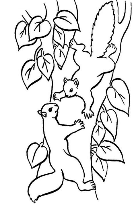 squirrel climbing tree coloring page animals  love
