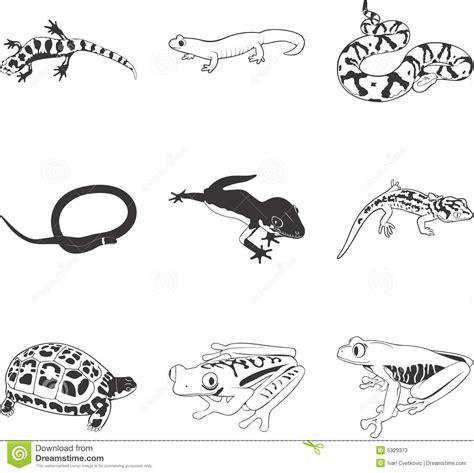 insectos anfibios y reptiles 8499281370 anfibios y reptiles ilustraci 243 n del vector imagen de anfibios 5329373