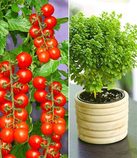 Pflanzen Shop by Pflanzen Shop Farn Mix 3 Pflanzen Outdoor Kaufen