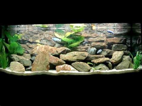 my juwel 400 liter malawi cichlids fishtank how to make do everything