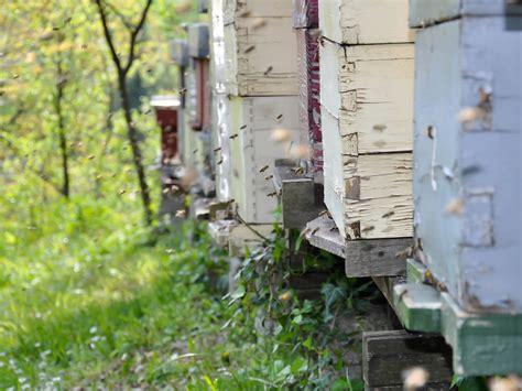 beekeeping backyard backyard beekeeping franklin county public library