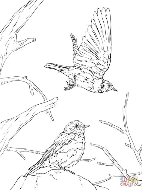 free coloring pages on bluebirds western bluebird coloring page free printable coloring pages