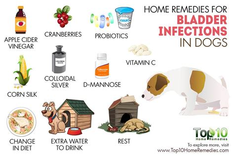 urinary tract infection in dogs home remedies for bladder infections in dogs top 10 home