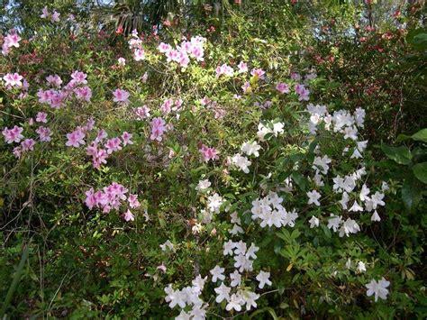 Neither Piety Nor Wit gardens photo tours forum ravine gardens state