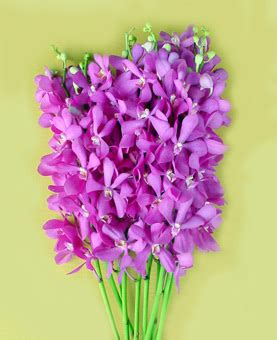 Kode Nb01 welcome to grand siam orchid