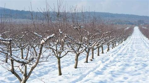 Trees That Shed Their Leaves In Winter by How Do Trees Survive Winter Mnn Nature Network