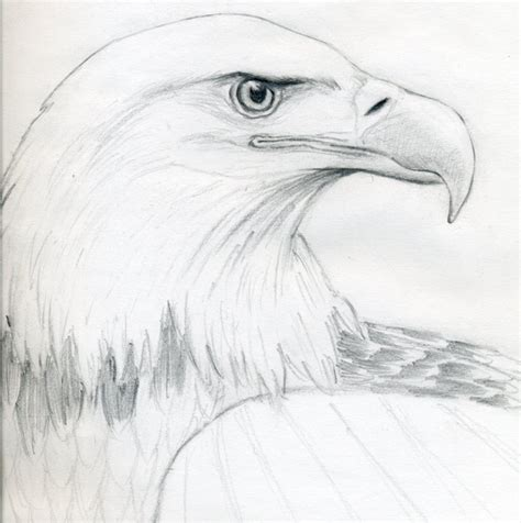 drawing sketches images draw a bald eagle