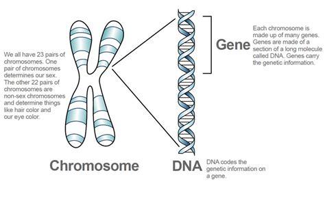 disease on y chromosome niemann pick type c inheritance npc info com