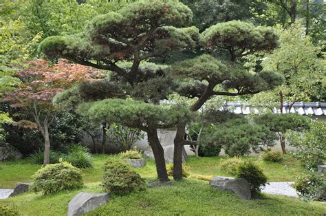 japanischer garten rasen japanischer garten tanne garden