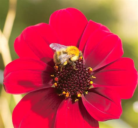 insects and flowers the favourite insect friendly flowers and plants september thegardenimpressionists